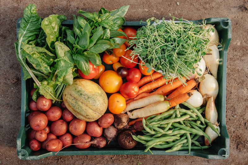 How to Start Your Vegetable Garden