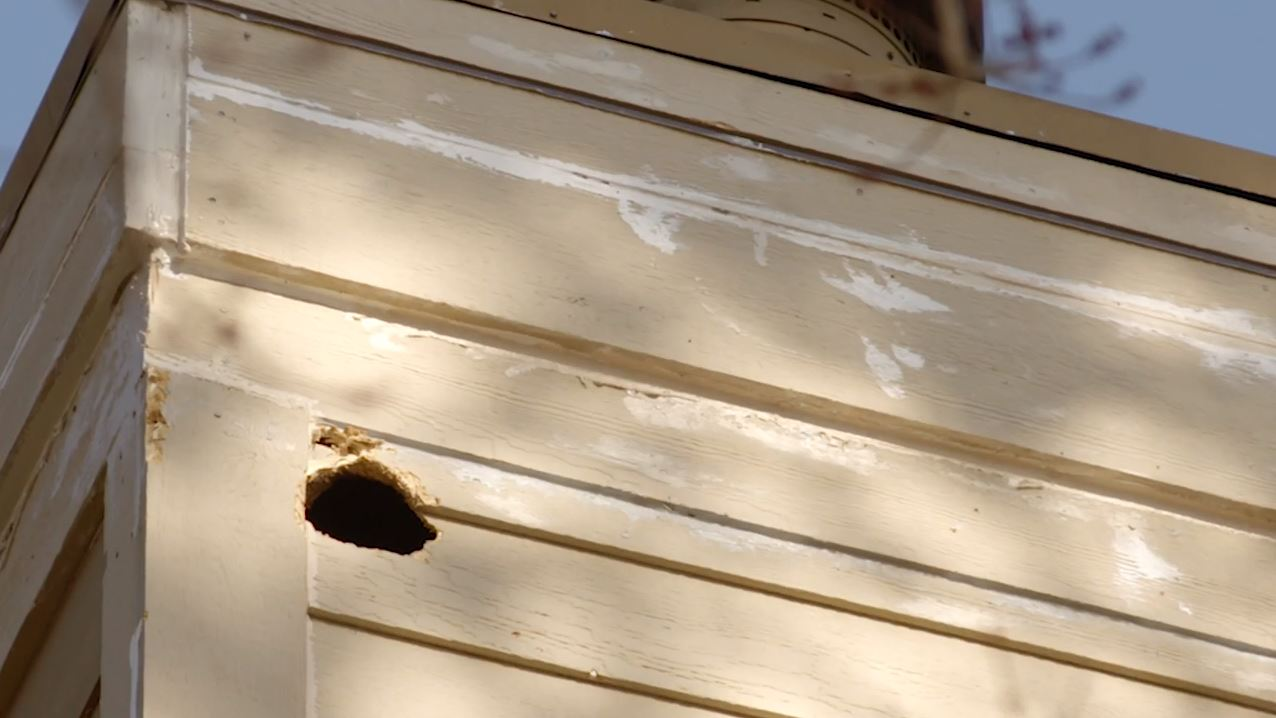 Woodpecker Damage to a Minnesota Home Solved by James Hardie Siding