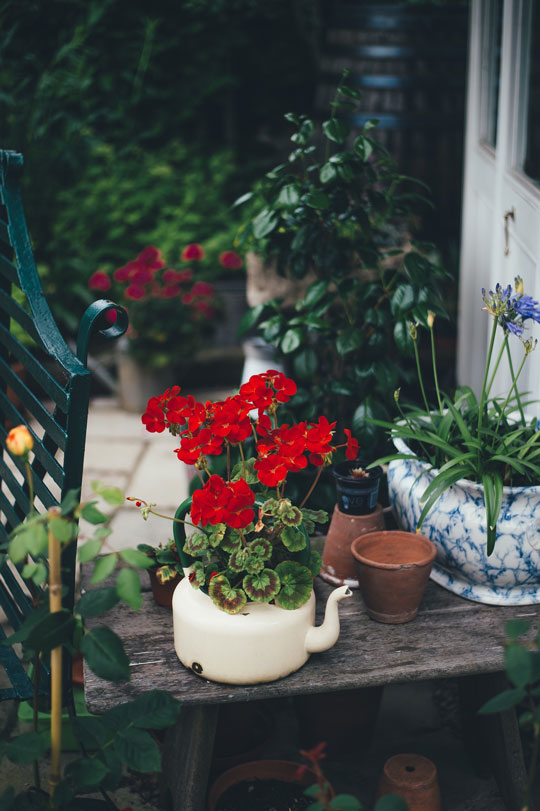 Small-Wooden-Table-Supporting-Red-Perennial-Geranium-Accompanying-Old-White-Teapot-Beside-Clay-Pot-And-Blue-Tie-Die-Pattern-Pot-In-Backyard-Patio-Garden